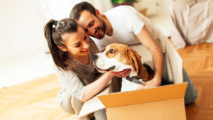 moving house - moving your dogs