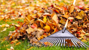 10 Autumn Gardening Tasks That Should Never Be Overlooked