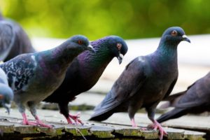 birds on a flat roof